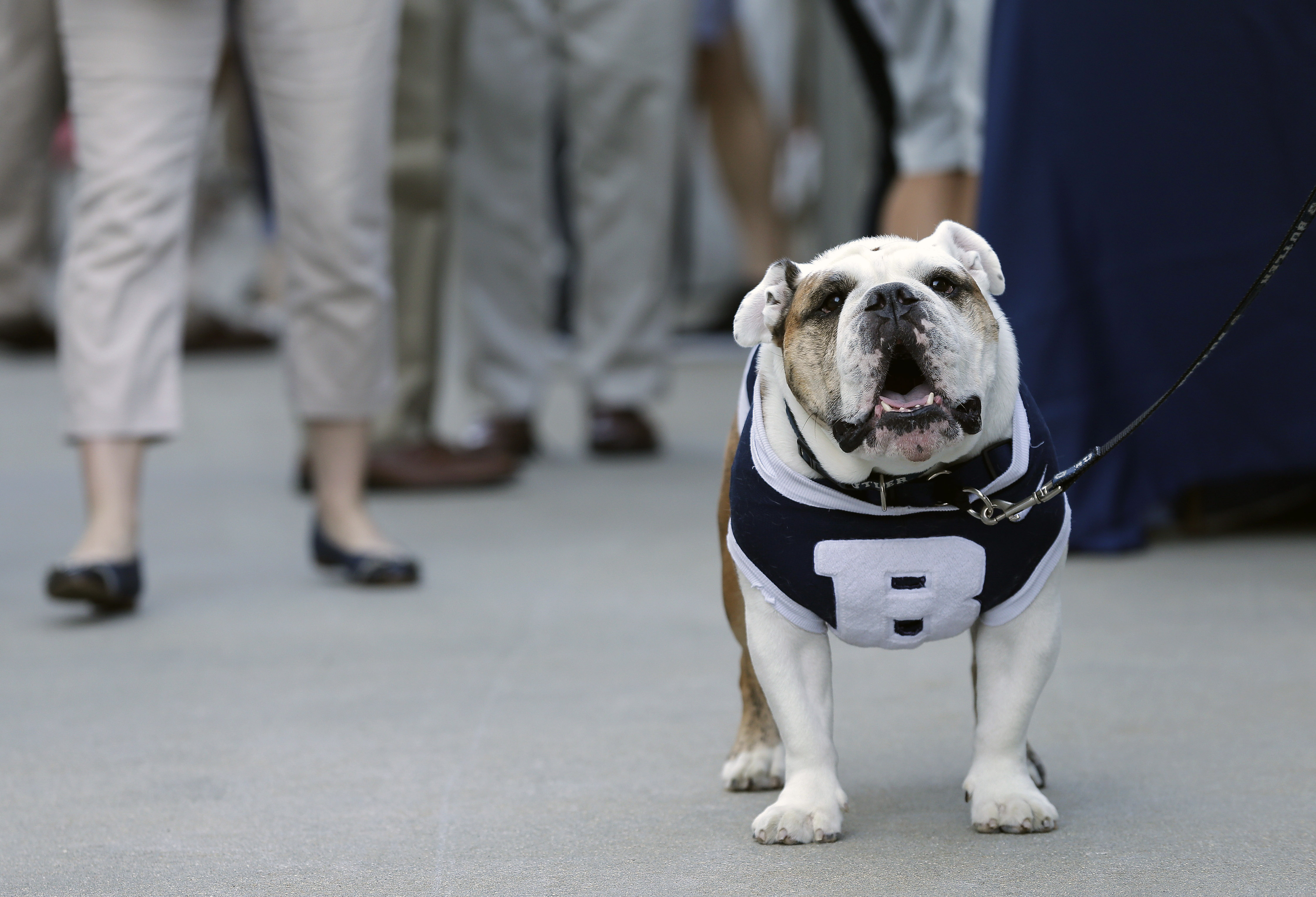 """The Butler mascot """"Butler Blue III"""" sits outside the PNC Arena during a fan pregame tailgate event ahead of a first-round men's college basketball game in the NCAA Tournament between Butler and Texas Tech, Thursday, March 17, 2016, in Raleigh, N.C. NCAA r"""