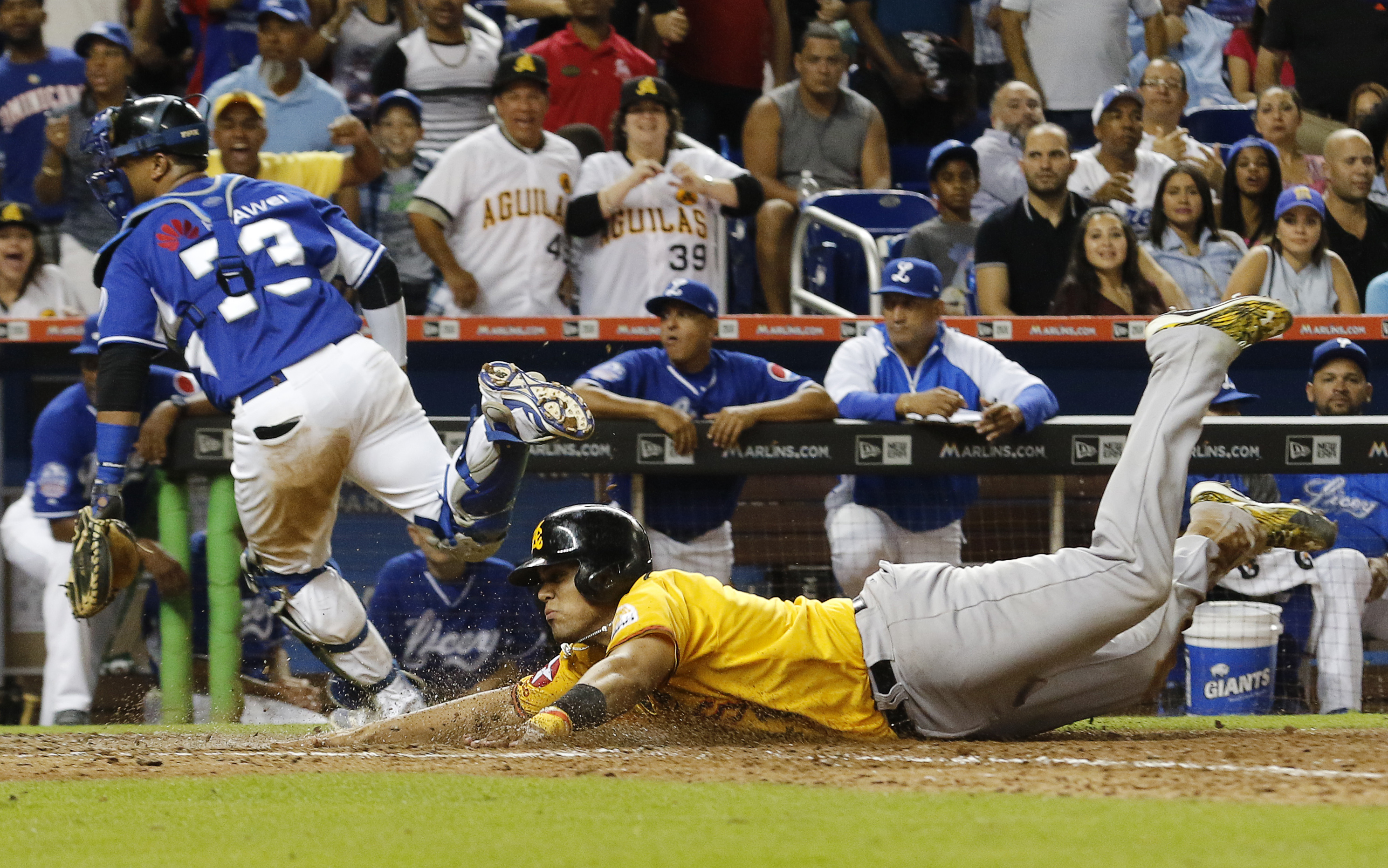 Aguilas' Francisco Pena slides to score as Tigres' catcher Yermin Mercedes cannot handle the throw in the ninth inning during a Serie de las Americas baseball game at Marlins Park in Miami, Saturday, Nov. 21, 2015. (AP Photo/Joe Skipper)