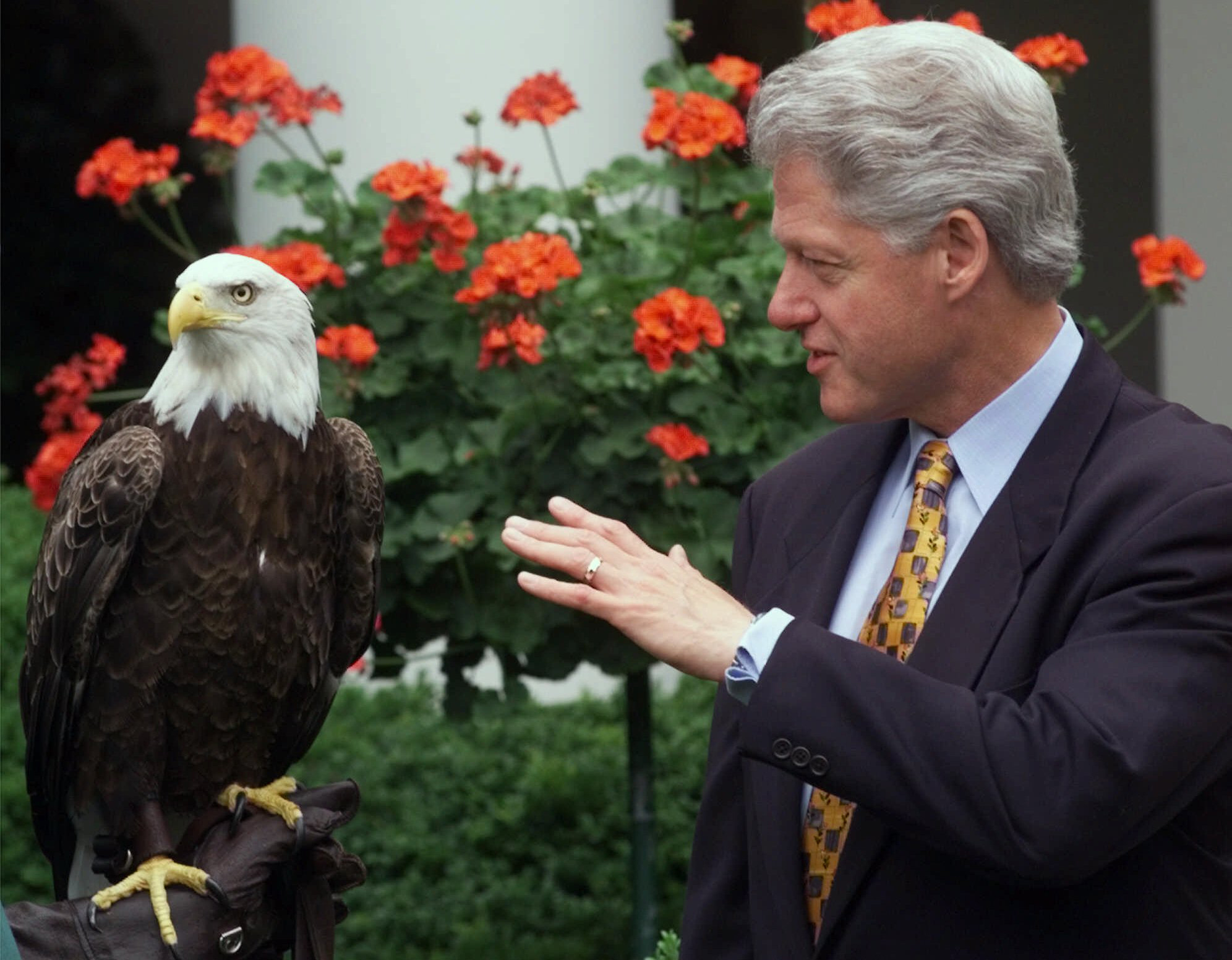 FILE - In this July 2, 1999, file photo, Challenger joins President Bill Clinton at a White House ceremony in Washington. He is considered the first bald eagle trained to fly freely at sports stadiums with his resume featuring three Pro Bowls, five differ