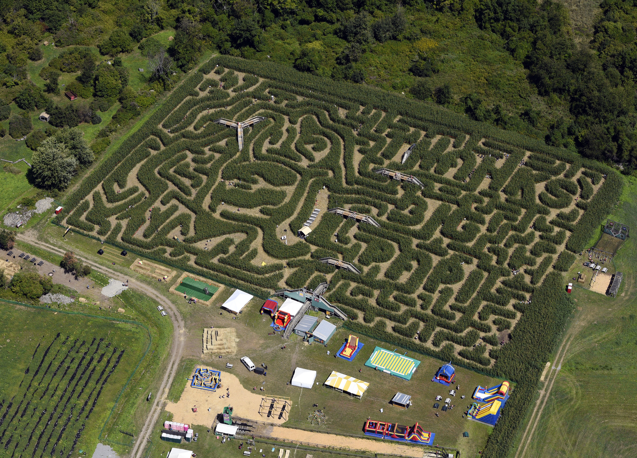 This aerial view shows a corn maze in the likeness ofBoston Red Sox slugger David Ortiz, Tuesday, Aug. 30, 2016, in Sterling, Mass. The 8-acre maze was created by Davis Mega Maze and features a cornstalk rendering of Ortiz's trademark home run pose of poi