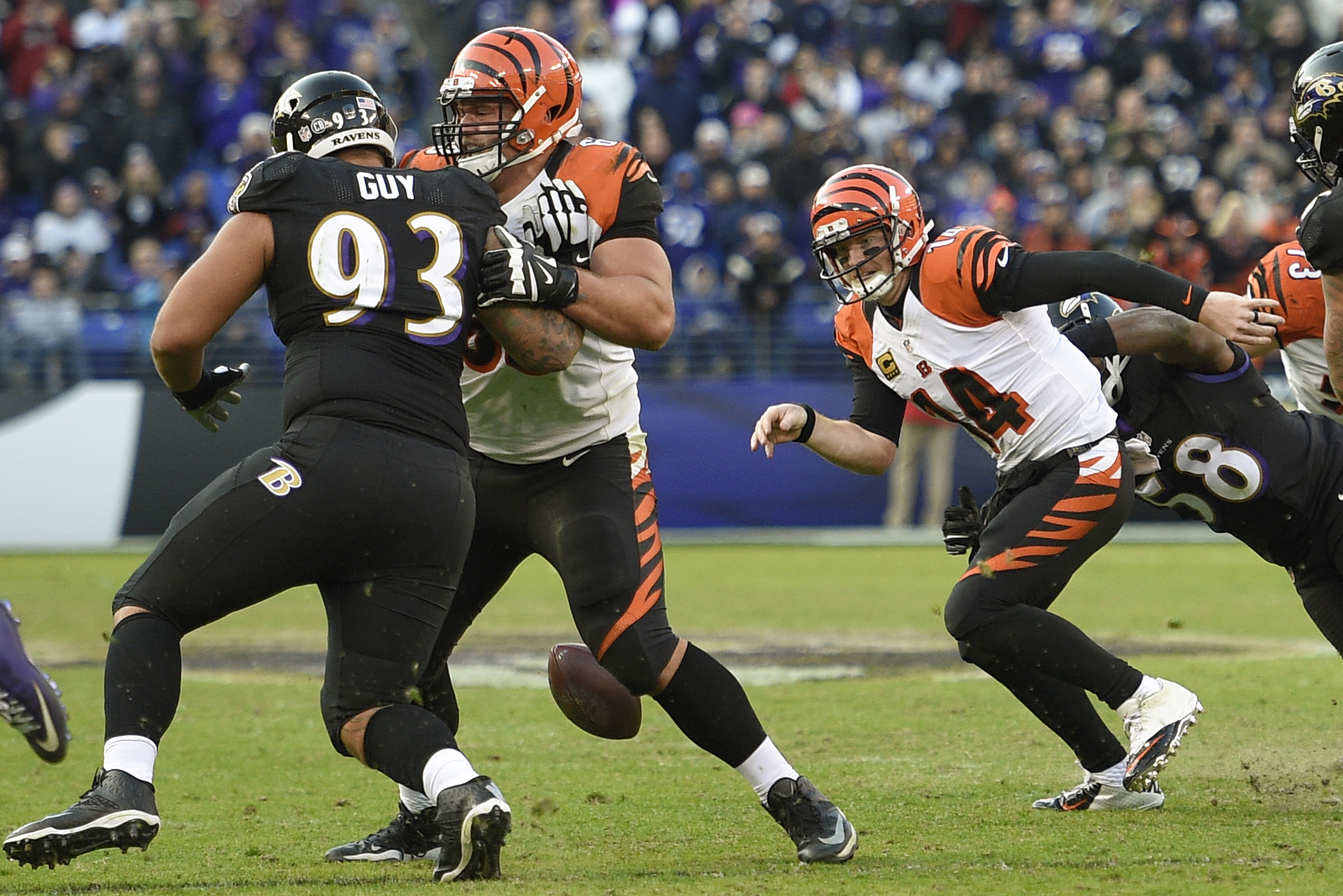 FILE - In this Nov. 27, 2016, file photo, Cincinnati Bengals quarterback Andy Dalton (14) chases a fumbled ball after being sacked by Baltimore Ravens outside linebacker Elvis Dumervil (58), far right, during the second half of an NFL football game agains