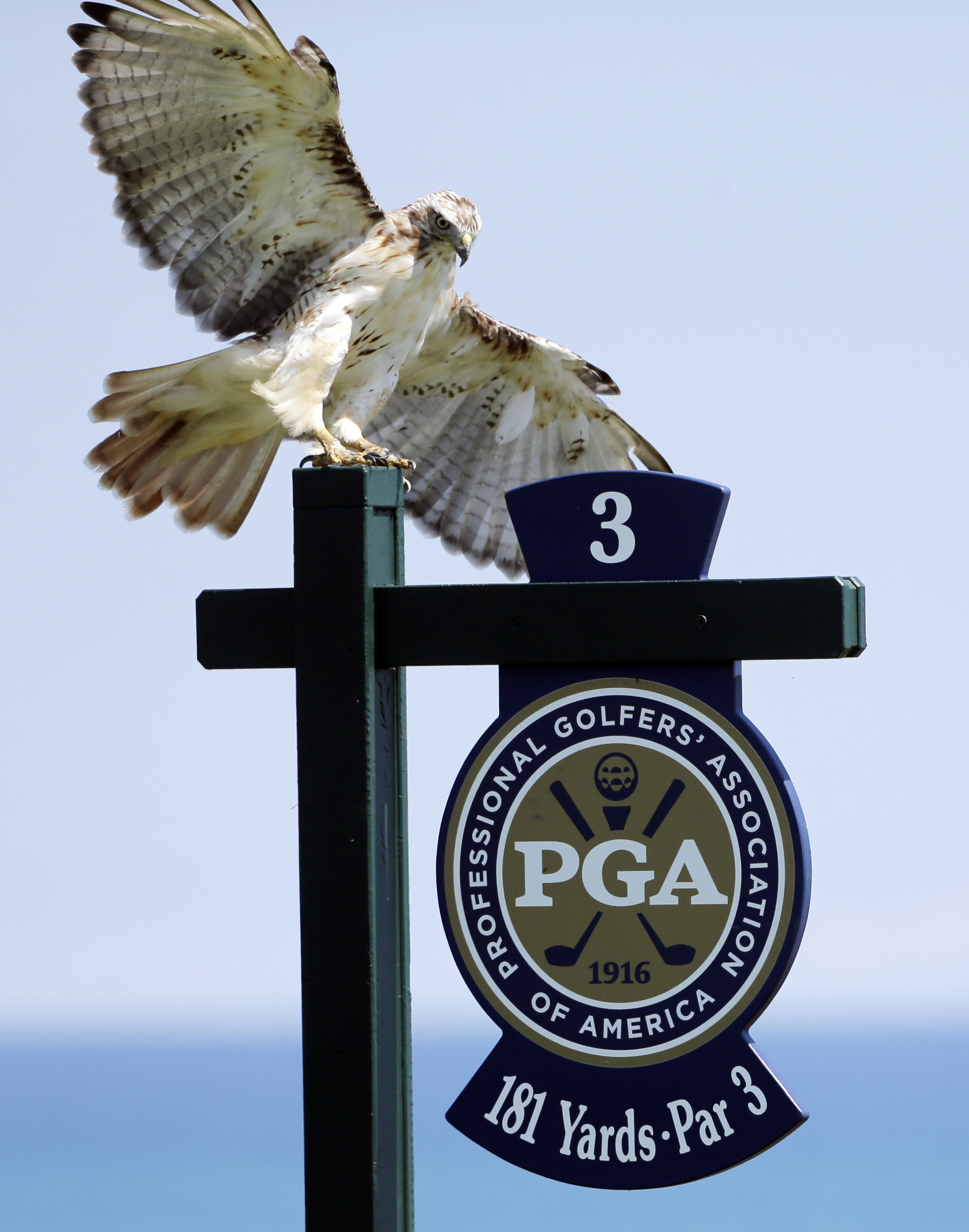A bird lands on the third hole yardage marker during a practice round for the PGA Championship golf tournament Wednesday, Aug. 12, 2015, at Whistling Straits in Haven, Wis. (AP Photo/Jae Hong)