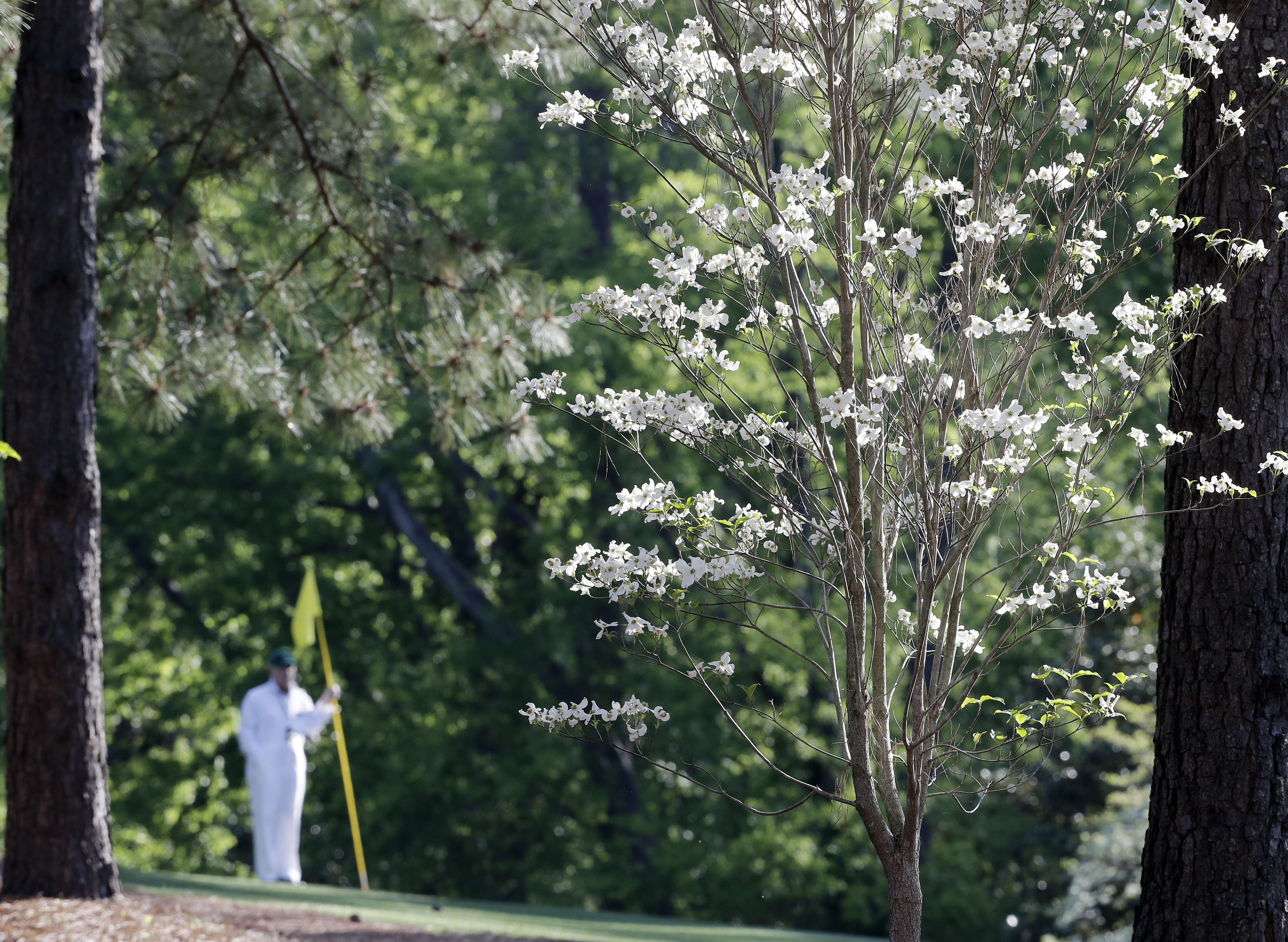 A caddie holds a green pin on the 11th hole during a practice round for the Masters golf tournament Wednesday, April 6, 2016, in Augusta, Ga. (AP Photo/Jae C. Hong)