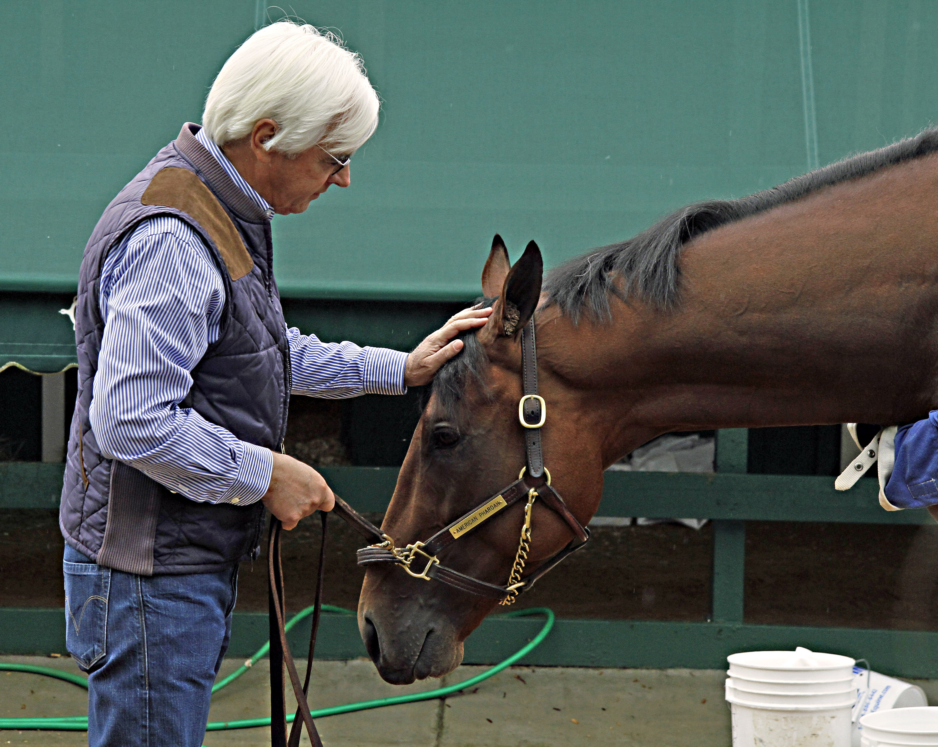 Hall of Fame trainer Bob Baffert rubs the head of American Pharoah as the Preakness-winning colt gets a bath outside the stakes barn Sunday, May 17, 2015, at Pimlico Race Course in Baltimore.  (AP Photo/Garry Jones)