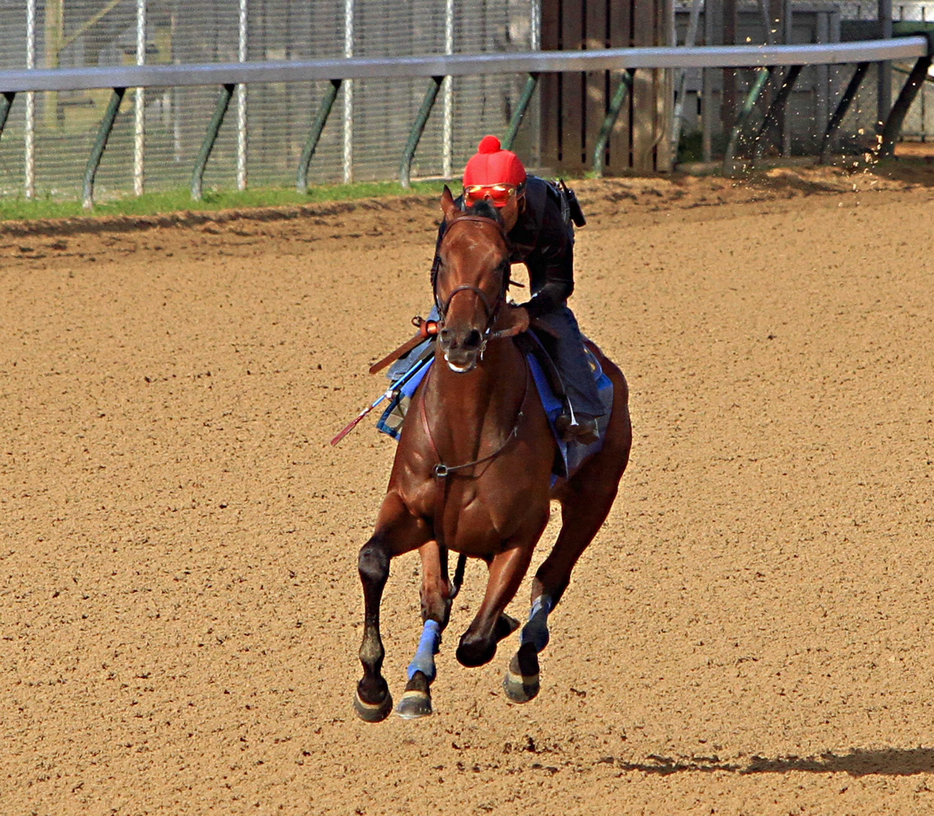 Ridden by jockey Martin Garcia, Kentucky Derby and Preakness Stakes winner American Pharoah begins a timed workout at Churchill Downs in Louisville, Ky., Tuesday, May 26, 2015. American Pharoah is preparing for a start in the Belmont Stakes in New York on