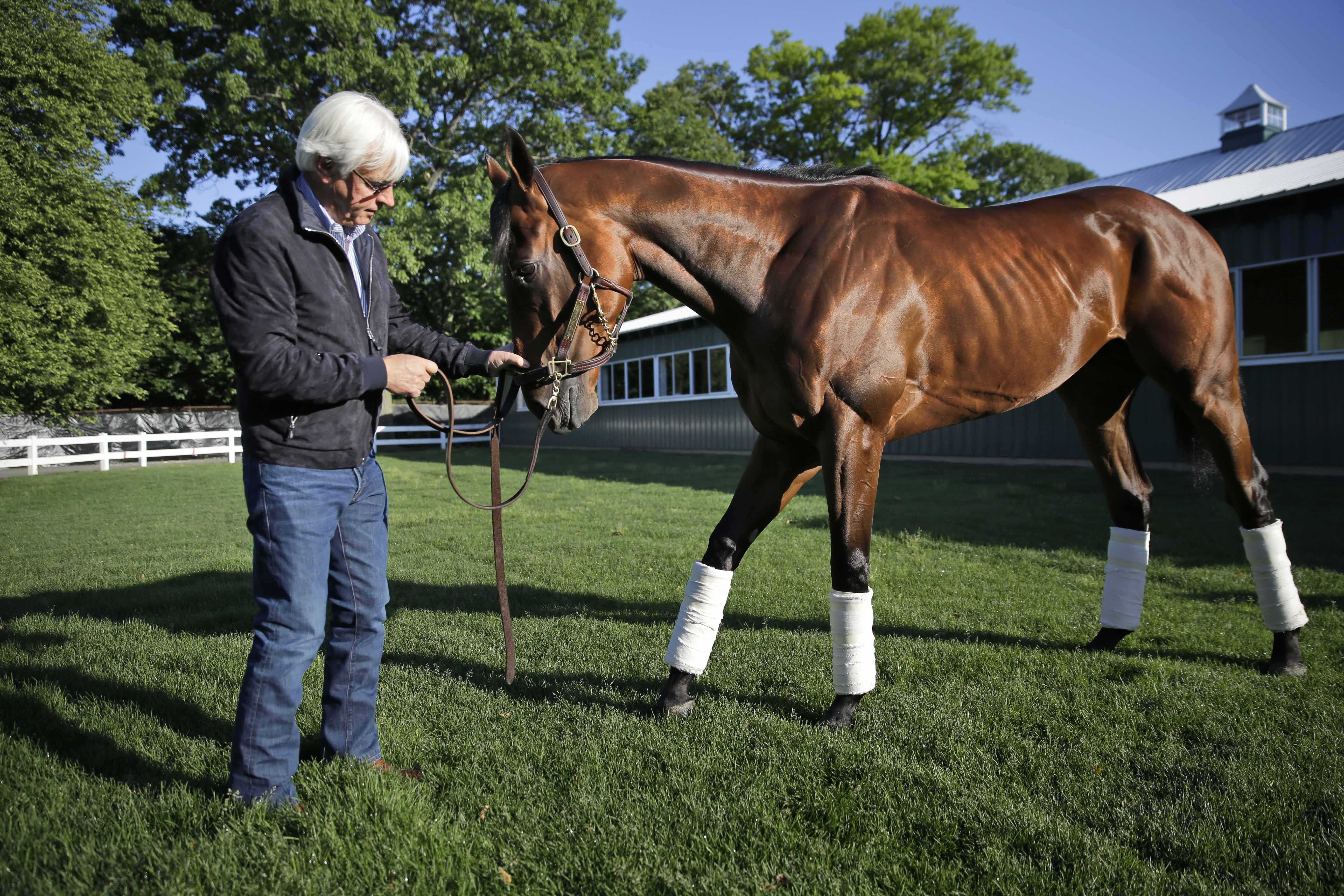 Trainer Bob Baffert shows Triple Crown winner American Pharoah to members of the media at Belmont Park in Elmont, N.Y., Sunday, June 7, 2015. American Pharoah won the Belmont Stakes to become the first horse to win the Triple Crown in 37 years. (AP Photo/