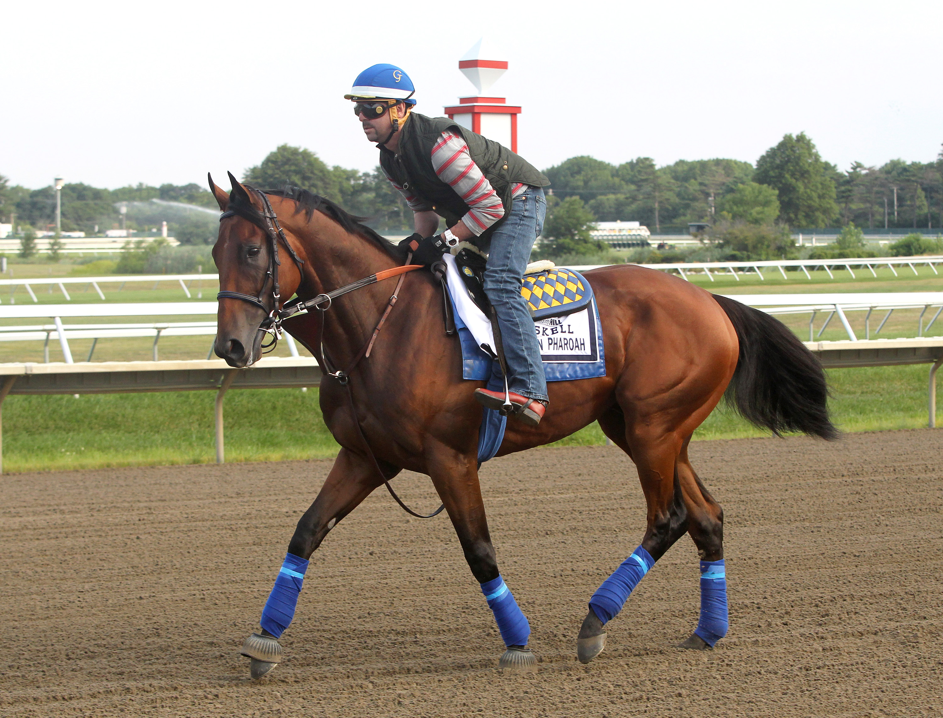 In this photo provided by Equi-Photo, Triple Crown winner American Pharoah with exercise rider Jorge Alvarez up, trains at Monmouth Park in Oceanport, N.J., Thursday, July 30, 2015. American Pharoah is expected to run in the Haskell Invitational at Monmou