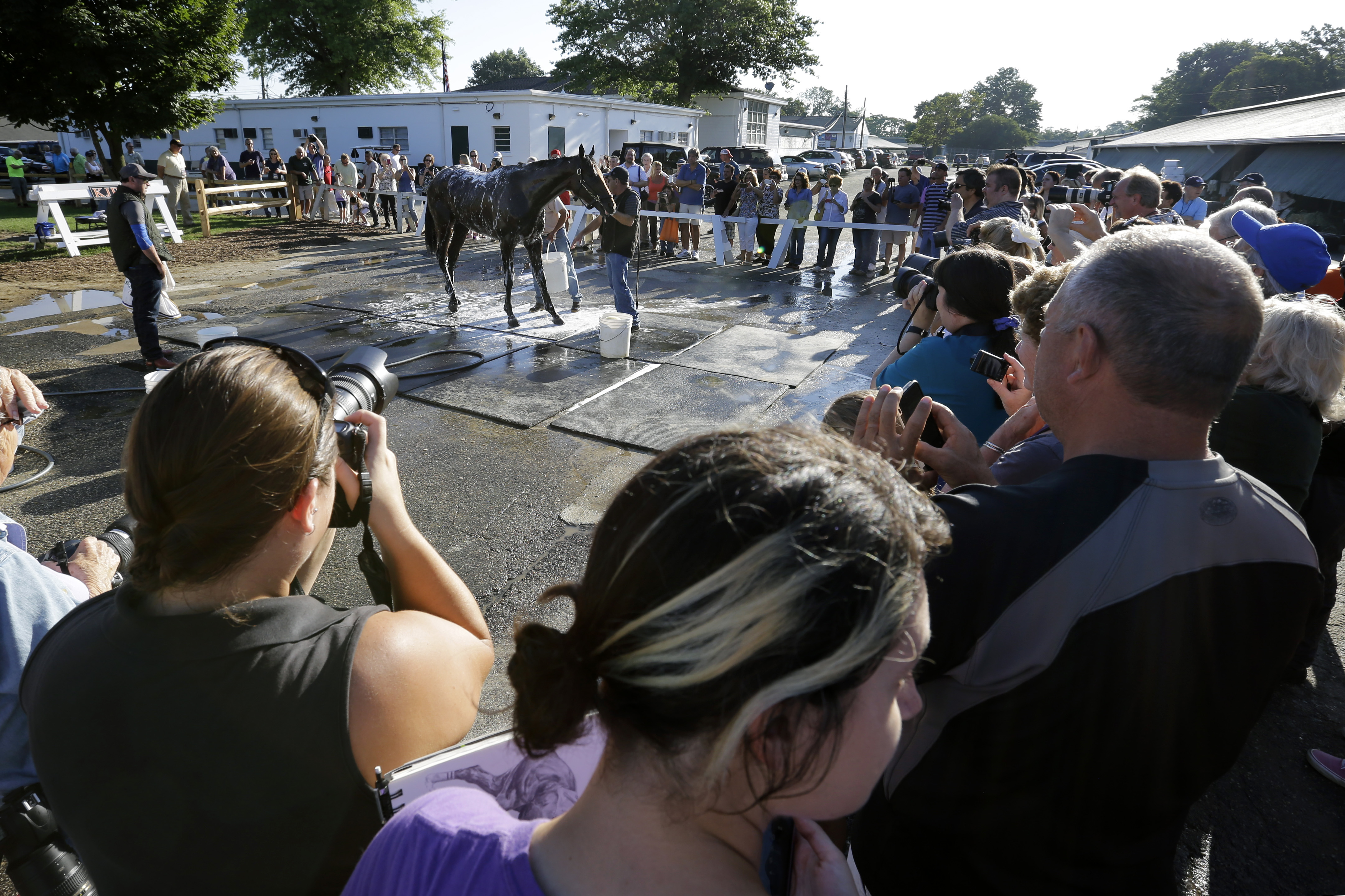 A large crowd gathers as Triple Crown winner American Pharoah gets a bath after a workout at Monmouth Park in Oceanport, N.J., Friday, July 31, 2015. American Pharoah is preparing for Sunday's running of the Haskell Invitational horse race. (AP Photo/Mel