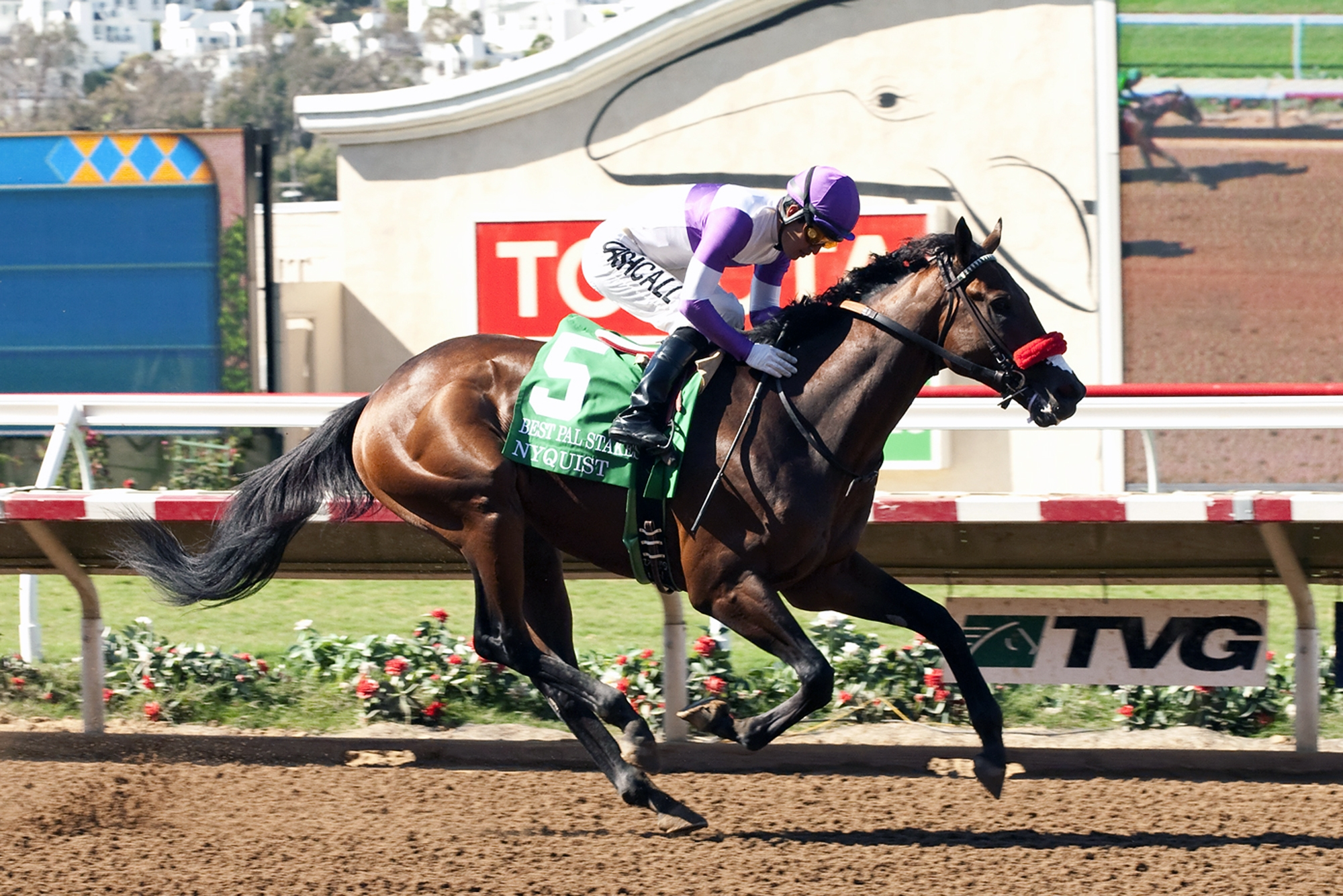 In this image provided by Benoit Photo, Nyquist, with Mario Gutierrez aboard, wins the Grade II, $200,000 Best Pal Stakes horse race Saturday, Aug. 8, 2015, at Del Mar Thoroughbred Club in Del Mar, Calif. (Benoit Photo via AP)