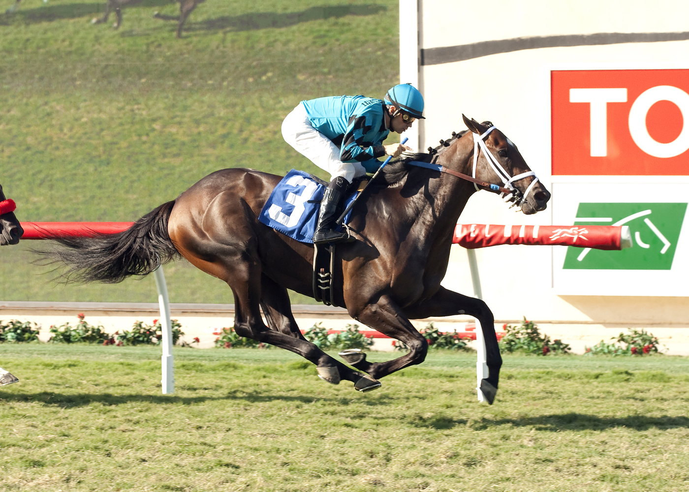 In this image provided by Benoit Photo, Hollywood Don, with Brice Blanc aboard, wins the $100,000 Del Mar Juvenile Turf horse race, Saturday, Sept. 5, 2015, at Del Mar Thoroughbred Club in Del Mar, Calif. (Benoit Photo via AP)  BENOIT PHOTO