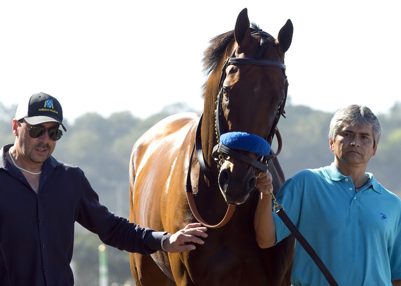 In this image provided by Benoit Photo, Triple Crown champ American Pharoah makes a special guest appearance between races Sunday, Sept. 6, 2015 at Del Mar Thoroughbred Club in Del Mar, Calif. (Benoit Photo via AP)