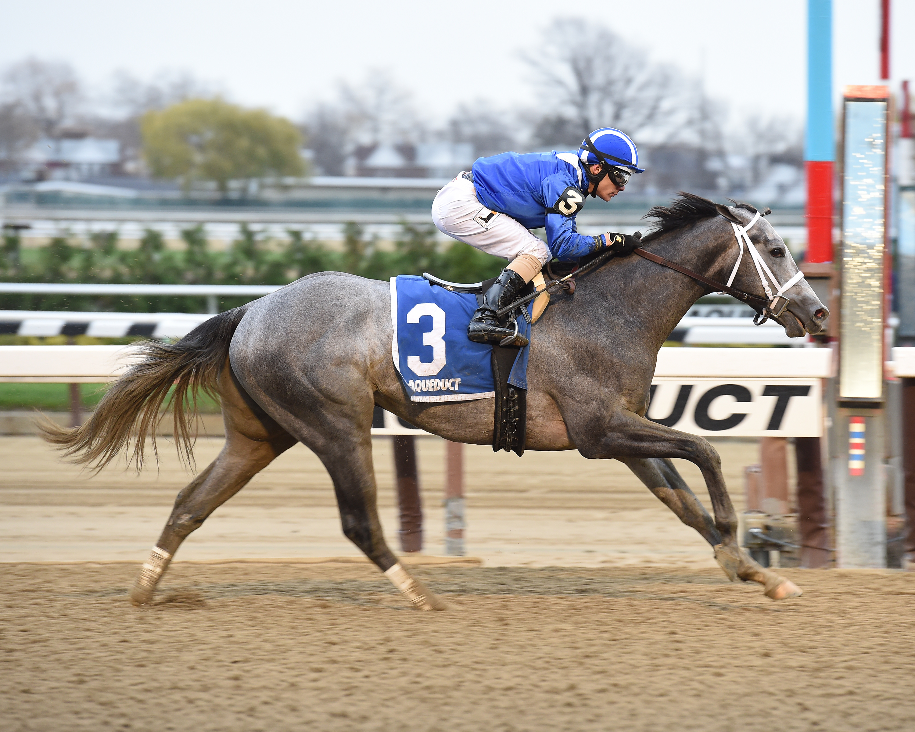 In this Nov. 28, 2015, photo provided by the New York Racing Association, Mohaymen, jockey Junior Alvarado up, wins the Remsen Stakes horse race at Aqueduct Racetrack in New York. The leading candidates for the Kentucky Derby are on schedule for a one-tim