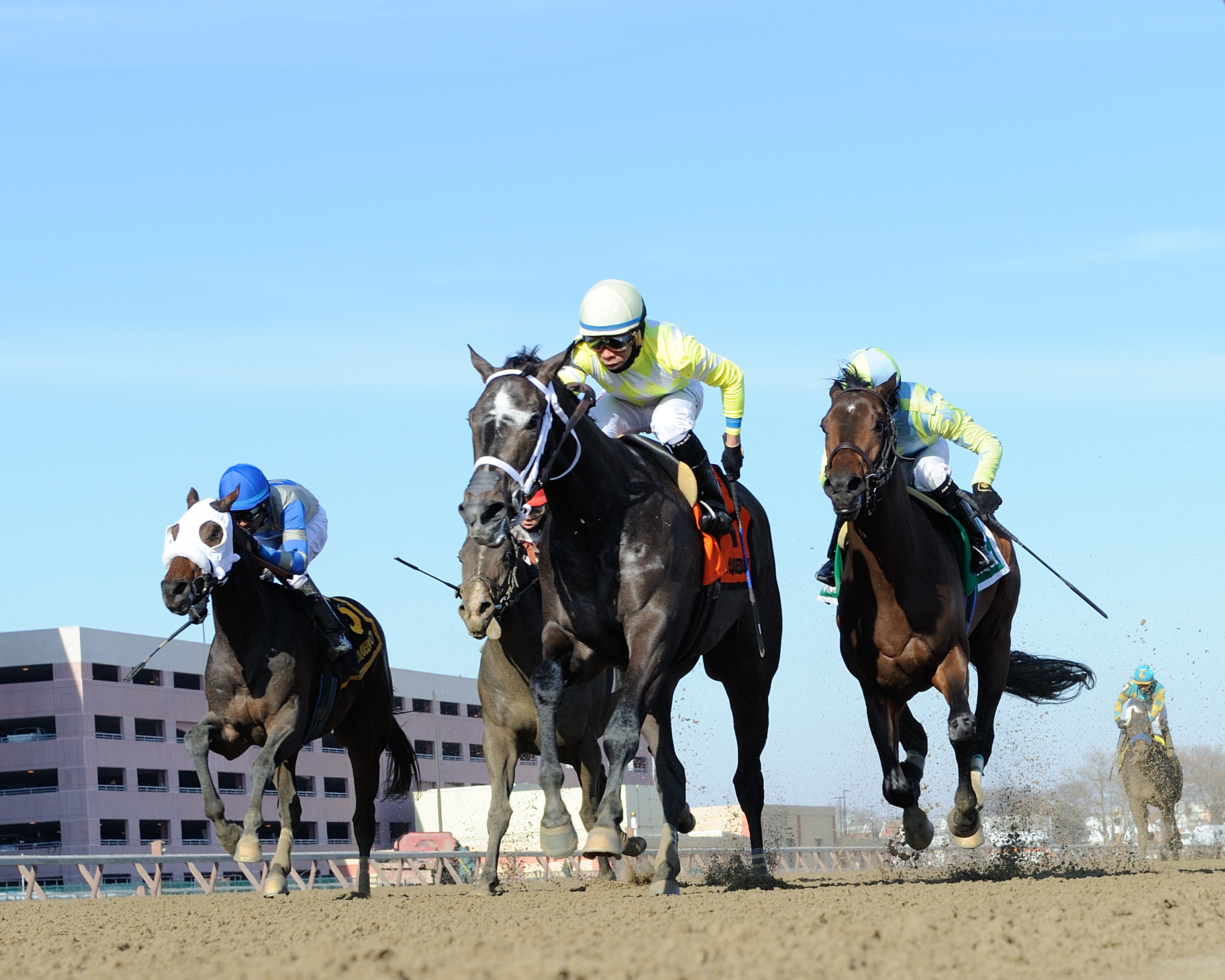 In this Jan. 30, 2016, photo provided by the New York Racing Association, Sunny Ridge (7), center, is shown winning the Withers Stakes at Aqueduct Raceway in New York. Sunny Ridge is expected to run in Saturday's March 5, 2016, $400,000 Gotham Stakes at A