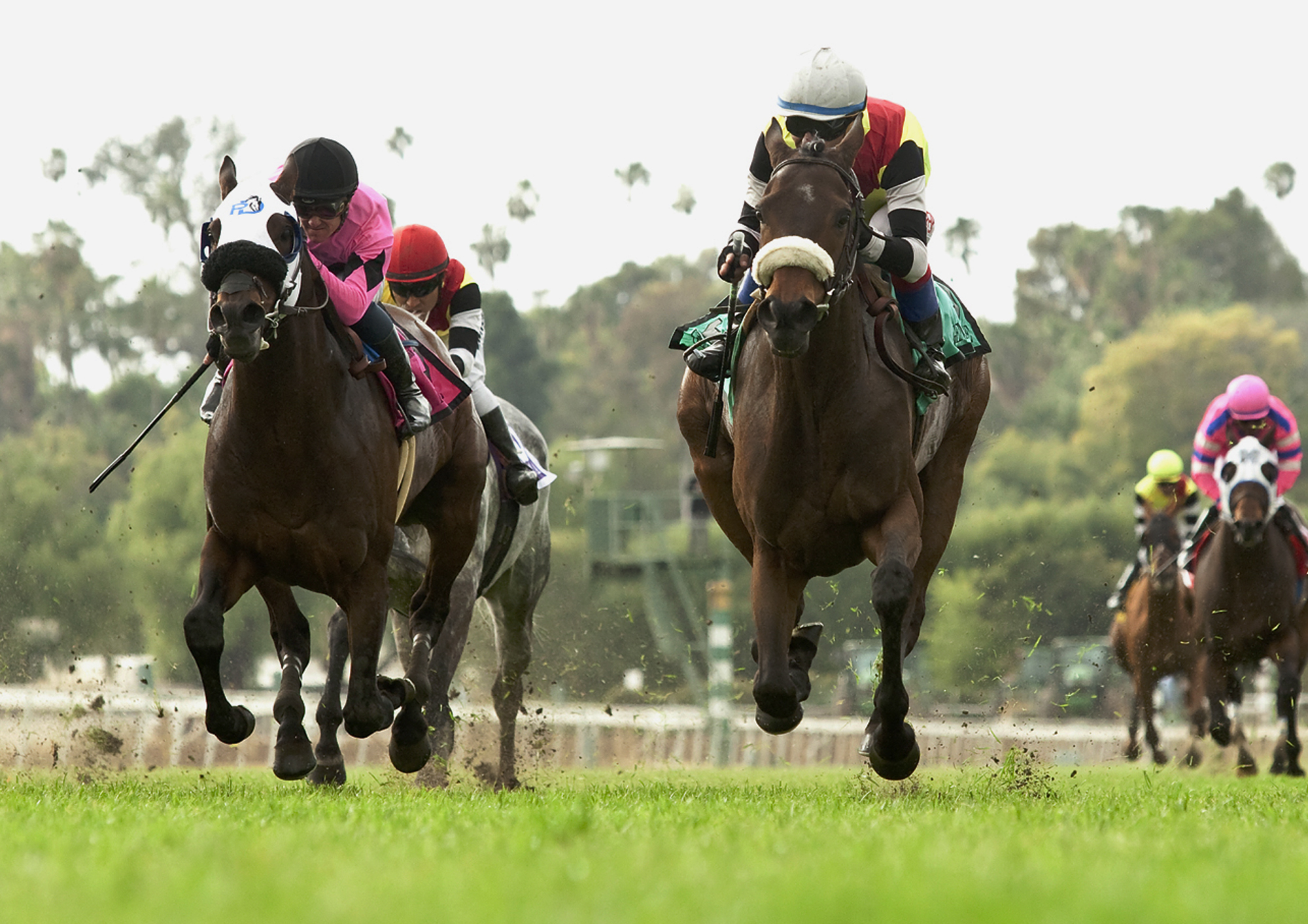 Haras Phillipson's Generosidade and jockey Tiago Pereira, right, hold off Highball, with Flavien Prat on it, compete in Santa Anita Park, Arcadia, Calif., Sunday, March 13, 2016 They won the Grade II $100,000. (Benoit Photo via AP) MANDATORY CREDIT