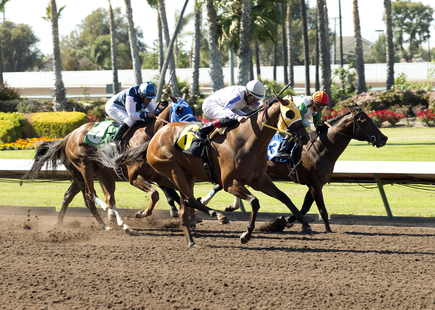 In a photo provided by Benoit Photo, San Onofre and jockey Edwin Maldonado, center, outleg Wild Dude, with Kent Desormeaux, right, and Raised a Secert, with Agapito Delgadillo, left, to win the Grade III, $100,000 Los Angeles Stakes horse race Saturday, A