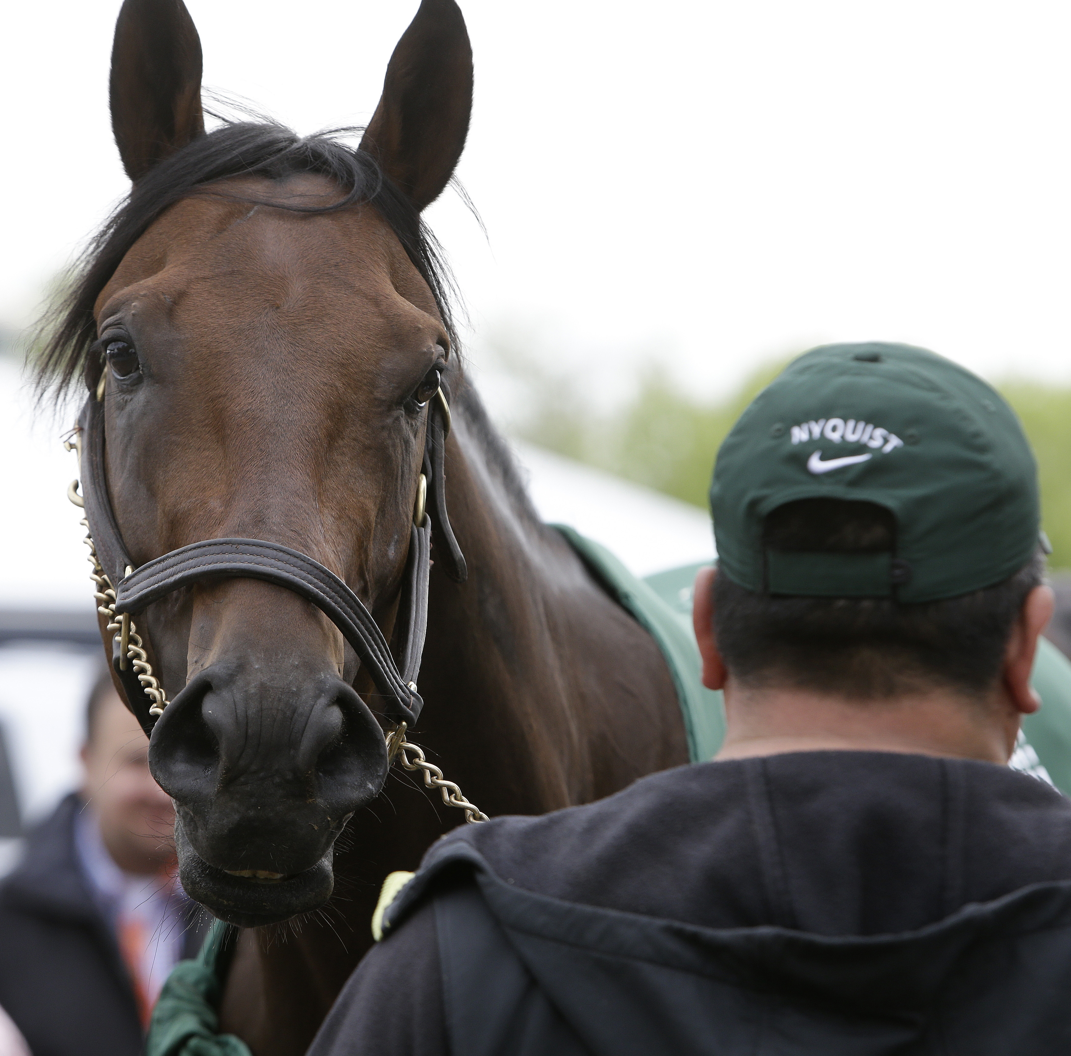 """Nyquist is attended to by hot walker Fernel """"Lefty"""" Serrano, after a workout, Thursday, May 19, 2016, in Baltimore. The 141th Preakness Horse Race will be held Saturday. (AP Photo/Garry Jones)"""