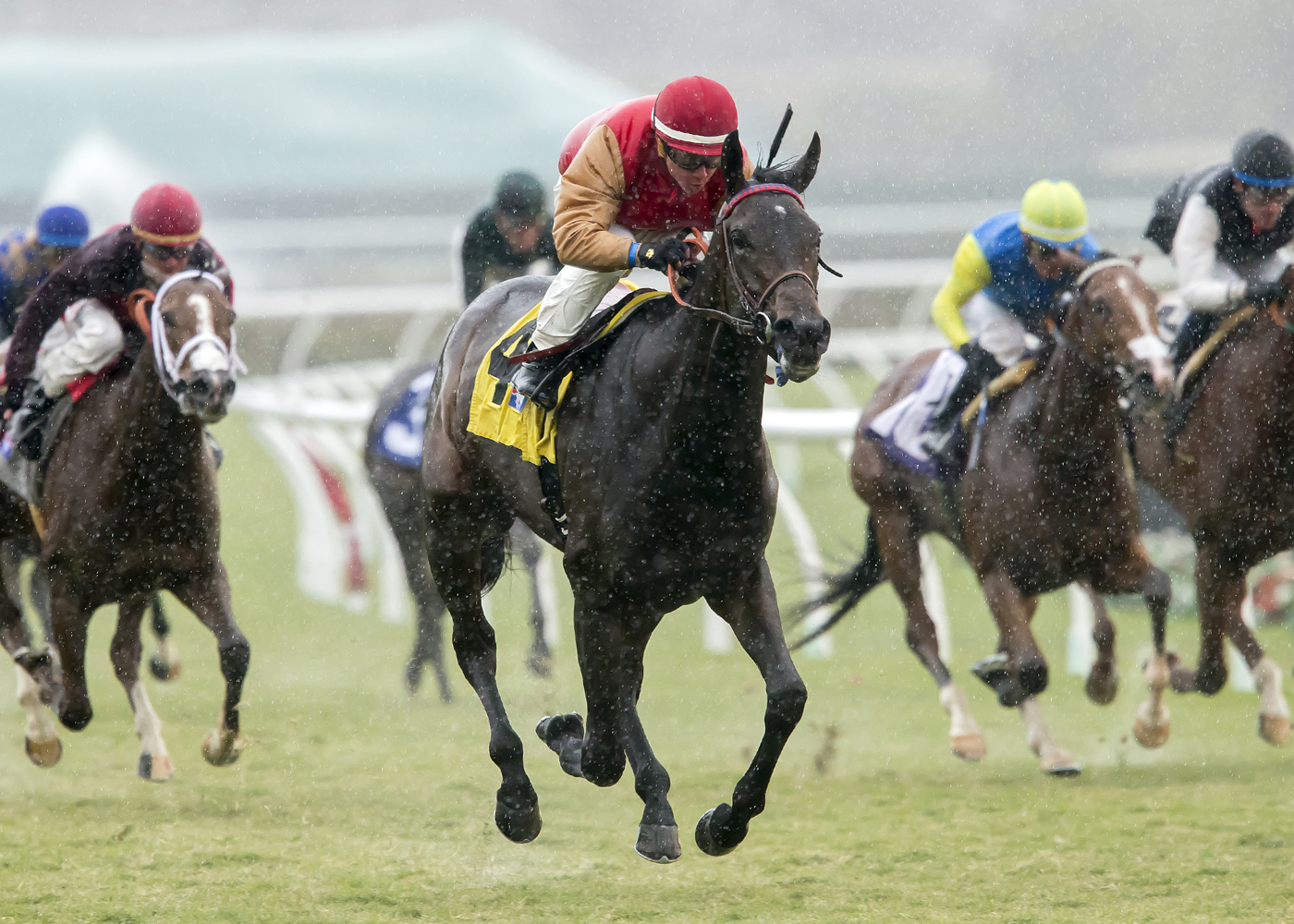 In a photo provided by Benoit Photo, Journey Home and jockey Drayden Van Dyke win the Grade III $100,000 Jimmy Durante Stakes horse race Saturday, Nov. 26, 2016, at Del Mar Thoroughbred Club in Del Mar, Calif. (Benoit Photo via AP)