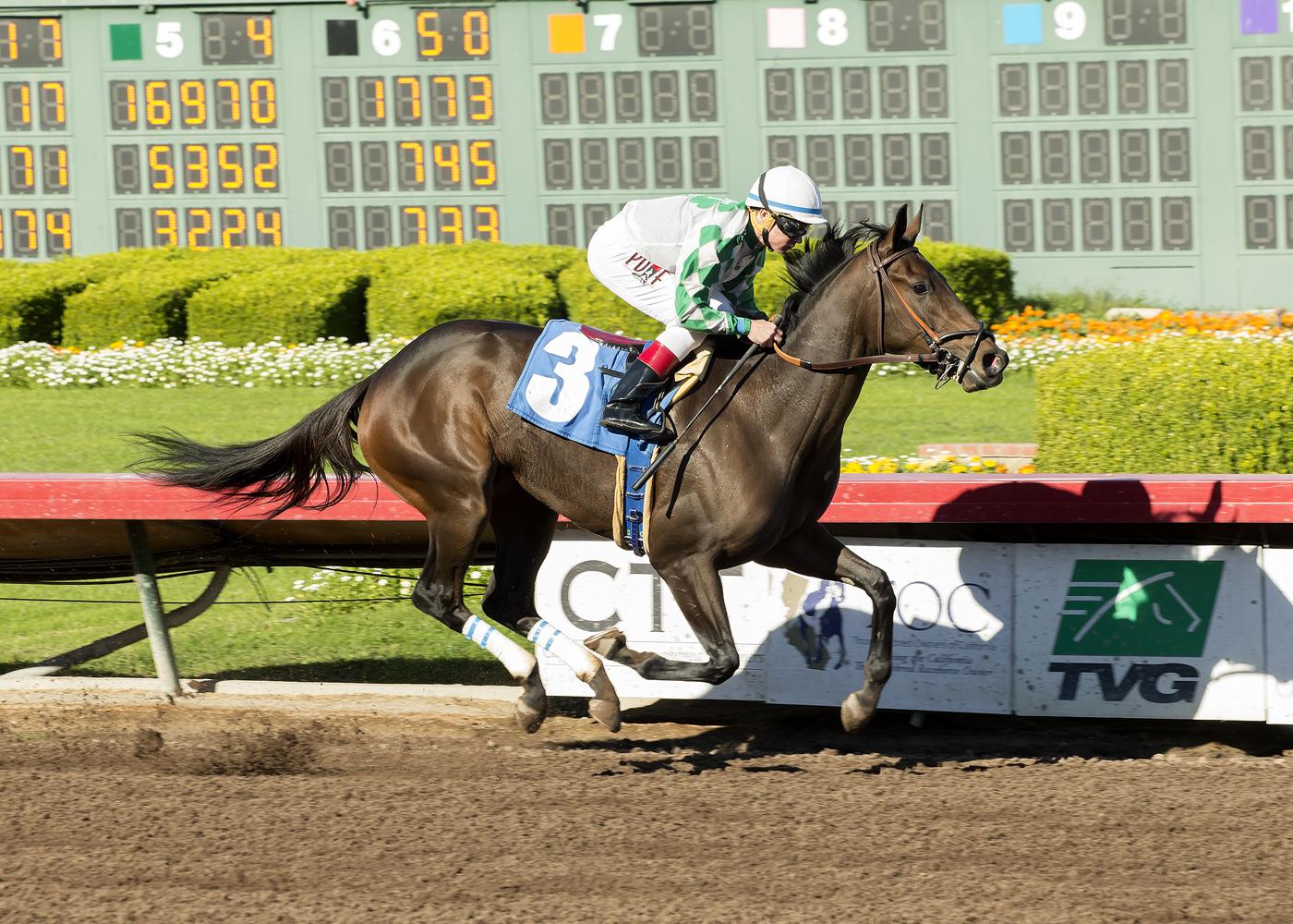 Joe Turner's Sircat Sally and jockey Drayden Van Dyke win the $100,000 Soviet Problem Stakes Saturday, Dec. 17, 2016, at Los Alamitos Race Course, in Cypress, Calif. (Benoit Photo via AP)