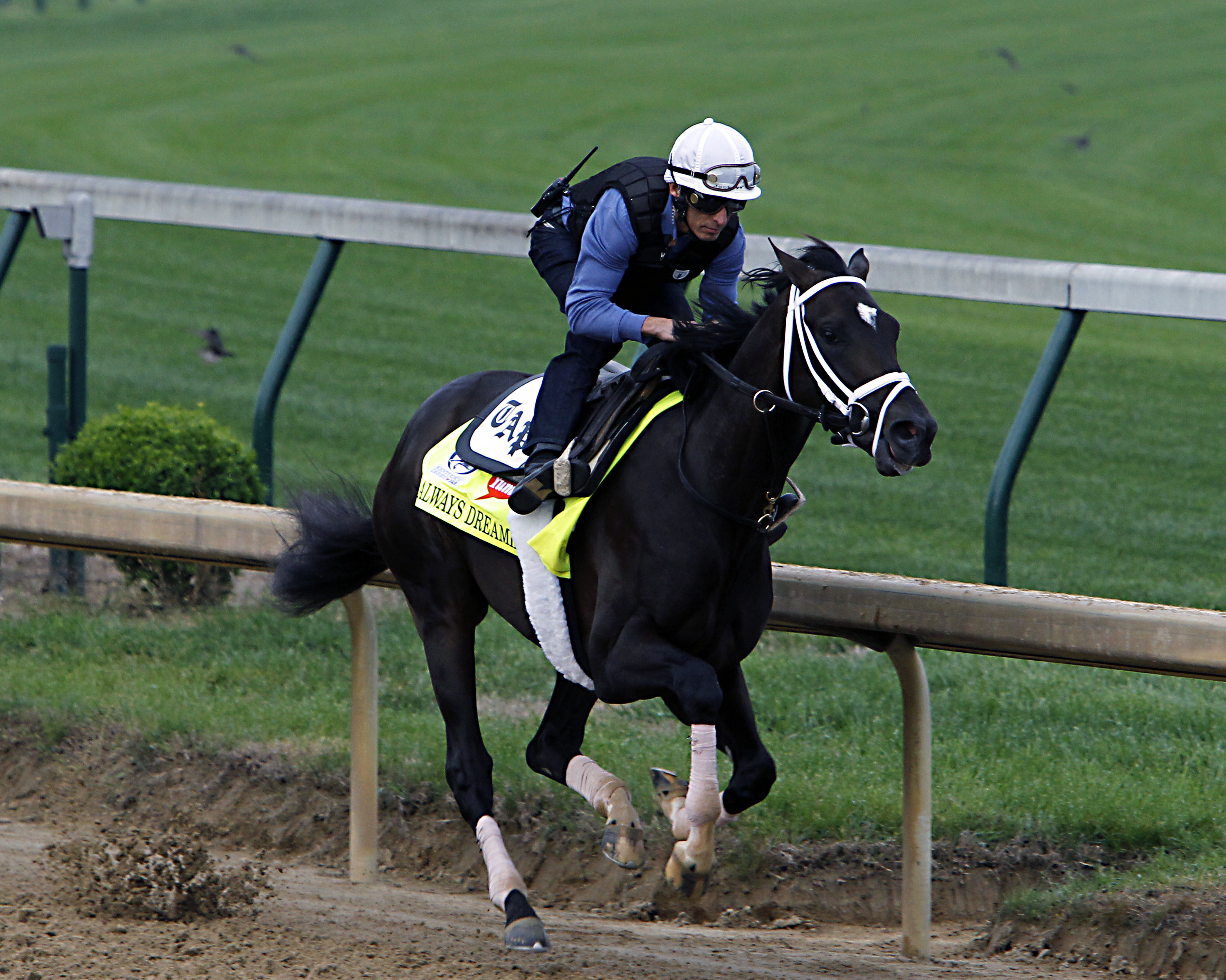 Kentucky Derby hopeful Always Dreaming works out under jockey John Velazquez at Churchill Downs in Louisville, Ky., Friday, April 28, 2017. Always Dreaming is one of five colts eyeing the May 6th horse race from the barn of trainer Todd Pletcher. (AP Phot
