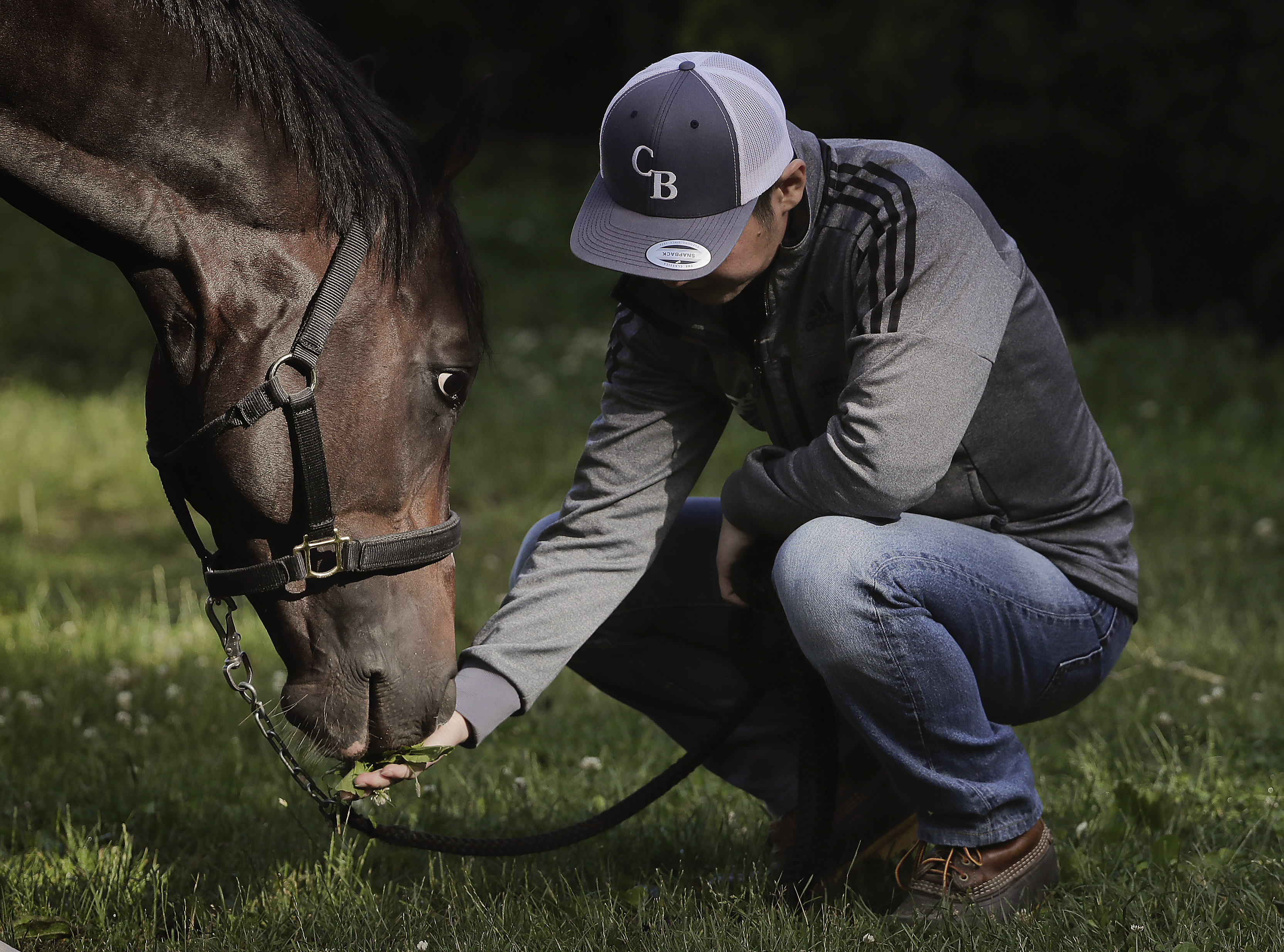 Assistant trainer Masaaki Minamida feeds Belmont Stakes hopeful Epicharis a handful of grass outside the barn, Thursday, June 8, 2017, in Elmont, N.Y. Epicharis, who is in the field of 12 for the 149th running of the Belmont Stakes horse race on Saturday,