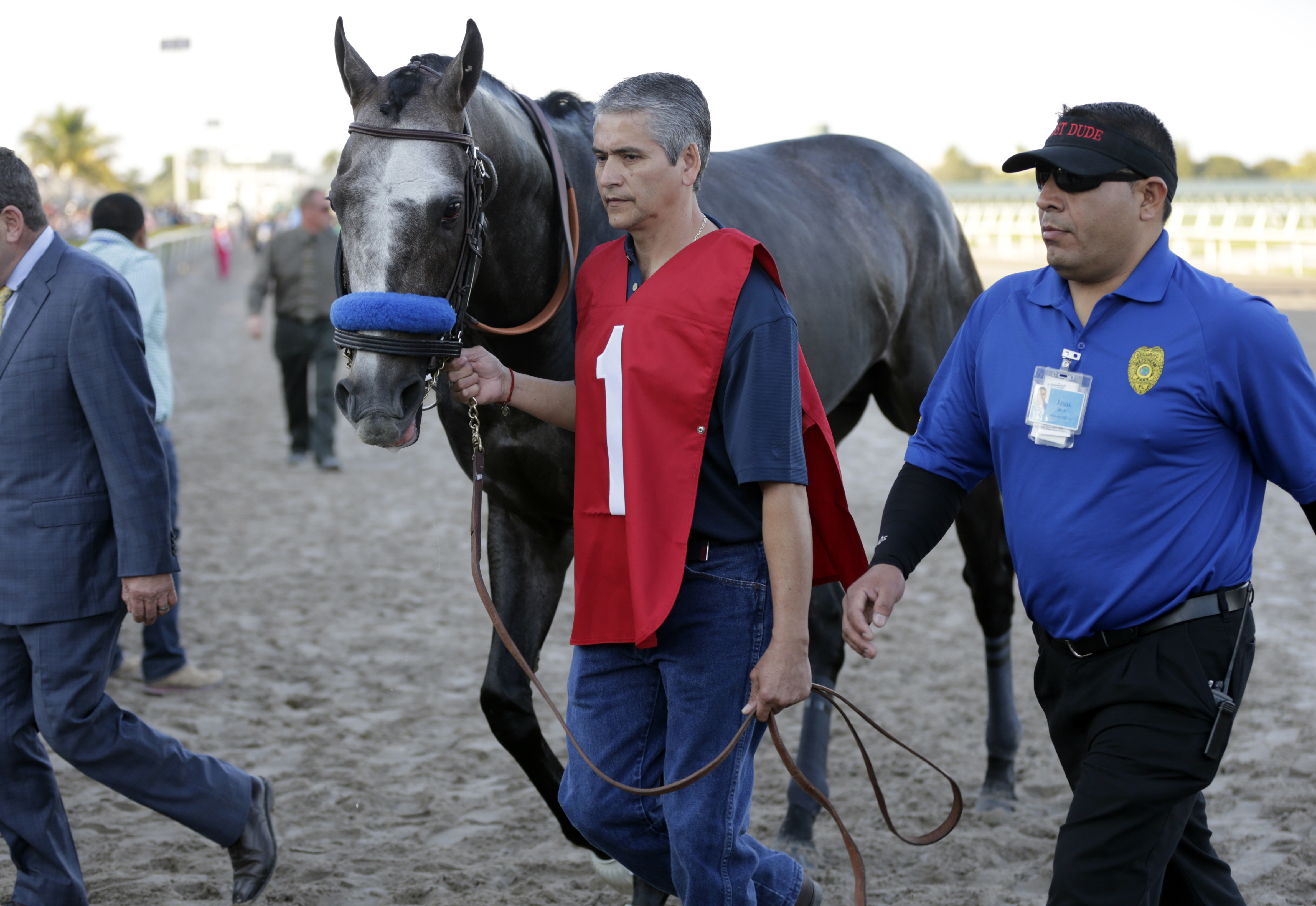 FILE - In this Jan. 28, 2017, file photo, Arrogate is led to the paddock before the inaugural running of the $12 million Pegasus World Cup horse race at Gulfstream Park, in Hallandale Beach, Fla. Arrogate returns to racing on Saturday in the Del Mar Handi