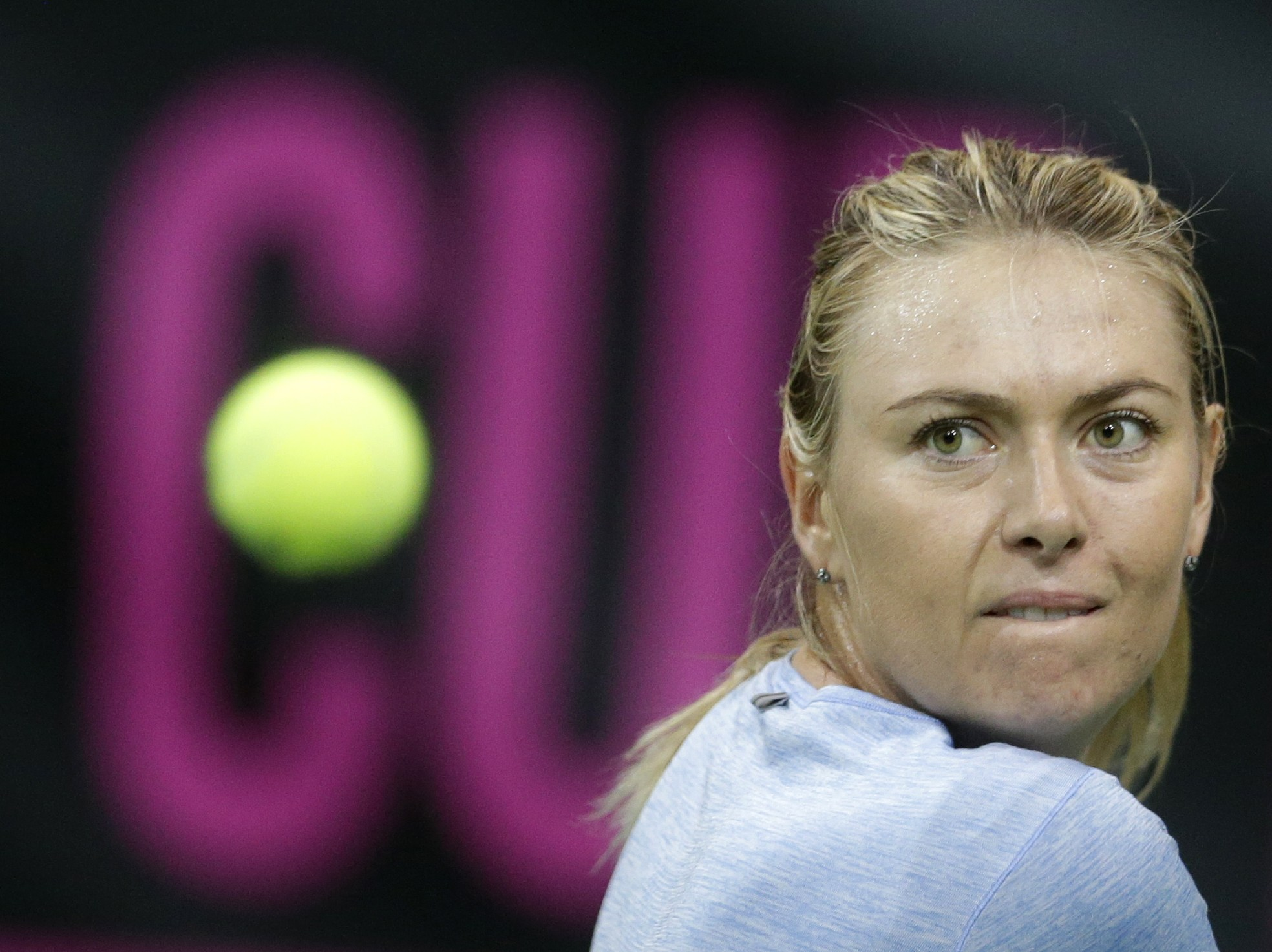 Maria Sharapova from Russia eyes a ball during a training session prior to the Fed Cup Final tennis tournament against Czech Republic in Prague, Czech Republic, Wednesday, Nov. 11, 2015. (AP Photo/Petr David Josek)