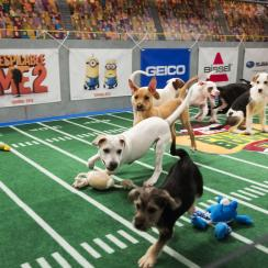 Puppy Bowl XI will feature Nigerian goats as cheerleaders.