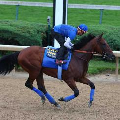 In preparation for his run at Triple Crown history, American Pharoah galloped at Churchill Downs on Sunday.