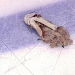 Predators catfish: How Nashville snuck fish into Stanley Cup