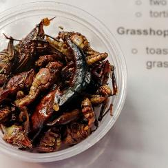 The Seattle Mariners offer toasted grasshoppers at Safeco Field.
