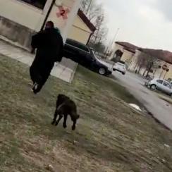 Mark Ingram chased by security dog