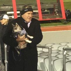 New England Patriots: Bill Belichick's dog wears hoodie (photo)