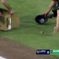 Hot Clicks: Baby ducks on field at baseball game (video)