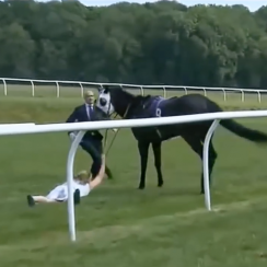 Reporter stops runaway horse at Chepstow (video)