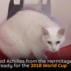 World Cup predictions: Cat named Achilles will make picks