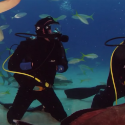 Rob Gronkowski, gronk, shark week, shark diving, bahamas, patriots