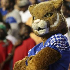 Kentucky Wildcat