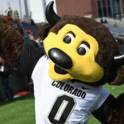 COLLEGE FOOTBALL: OCT 14 Colorado at Oregon State