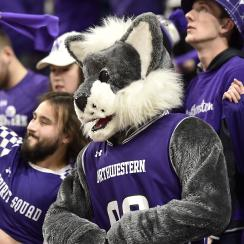 Northwestern shrieking fan