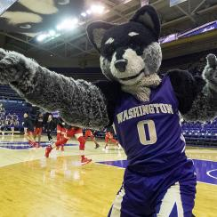COLLEGE BASKETBALL: JAN 13 Women's Utah at Washington