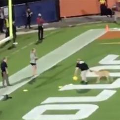 dog-frisbee-catch-aaf
