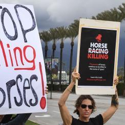 Horse racing protestors after Santa Anita deaths