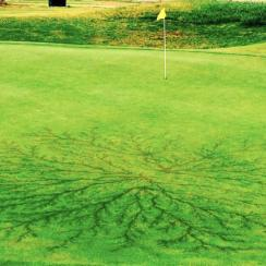 Weeks Park Golf Club in Texas had some unexpected damage to the 15th hole this week.