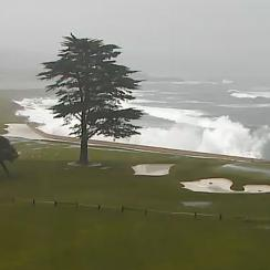 The downed Cypress tree can be seen at upper left.