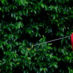 Tiger Woods tees off in the final round of the Masters.