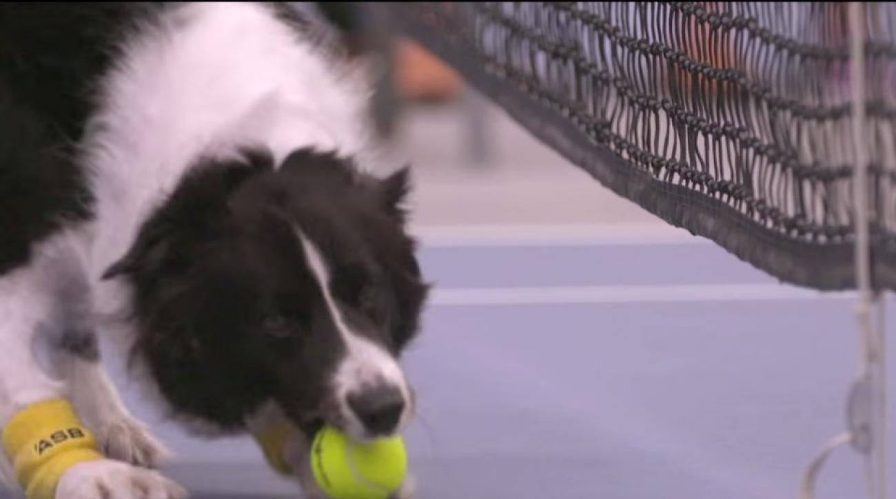 Venus Williams, Svetlana Kuznetsova play match with dogs for ball boys