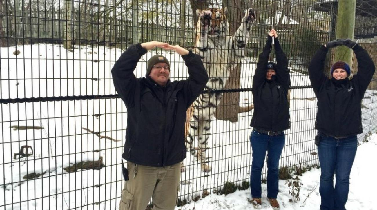 Columbus zoo gets tiger to be H in OHIO