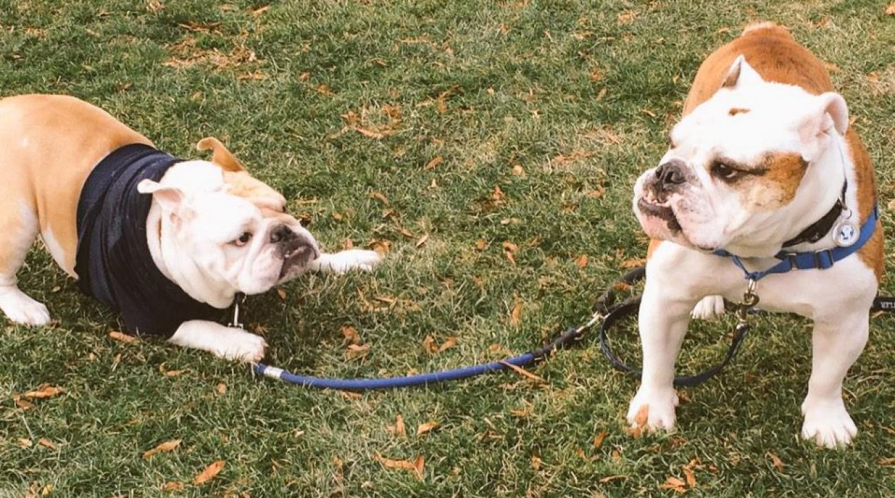 Georgetown, Butler have a bulldog meetup