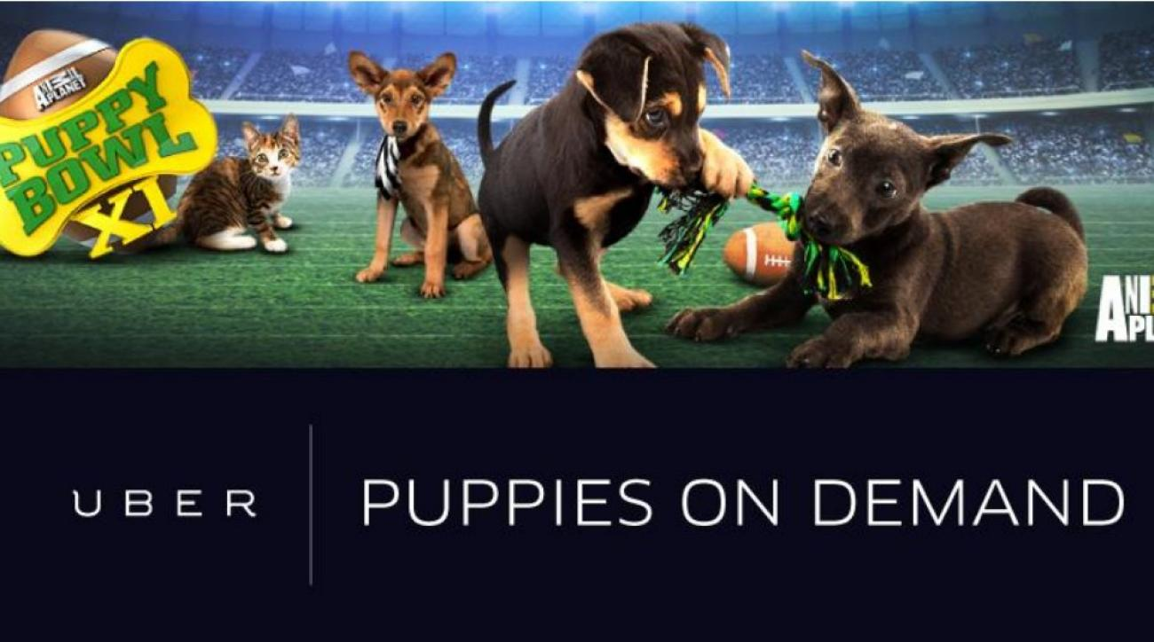 Uber is offering Puppy bowl puppies on Demand