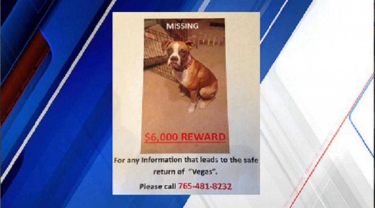 Indianapolis Colts offering $6,000 reward for stolen puppy